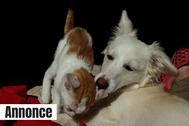 cat-and-dog-493633_1280