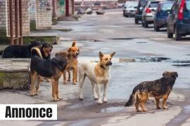 hjemlos-hund